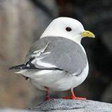 Популяция арктических птиц под угрозой из-за изменения климата